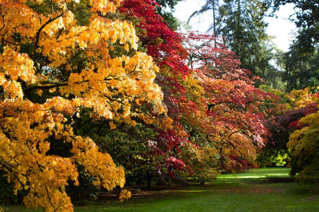 westonbirt-arboretum-50-of-74